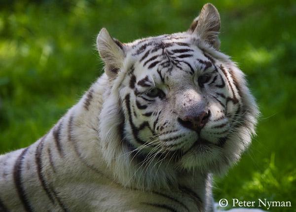 http://www.pny.se/djurparker/parkenzoo/pny_9583b600.jpg