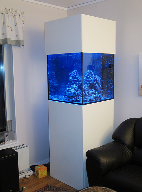 Long time lurking reef sanctuary for Cube saltwater fish tank